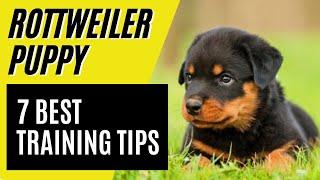 7 BEST Rottweiler Puppy Training Tips  How to train a Rottweiler