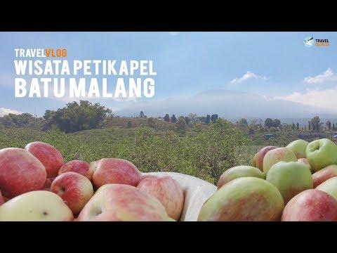 nyobain-4-jenis-apel-di-wisata-petik-apel---malang