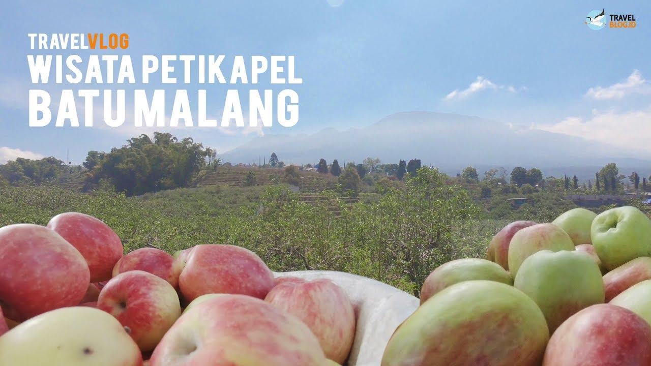 Nyobain 4 Jenis Apel Di Wisata Petik Apel Malang Youtube