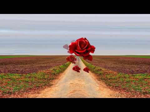 GOOD MORNING video -Wishes,Quotes,messages , Animation-WhatsApp