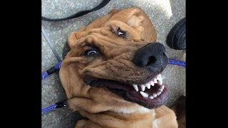 my doggo has stopped working...
