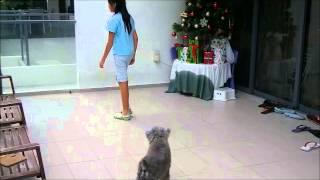 Teaching Sit Demo Video   Dog Clicker Training