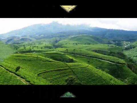Sunda Rasta - Memory Cianjur
