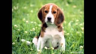 Dog Training Houston