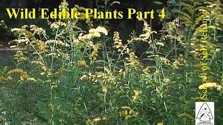 Wild Edible Plants Part 4
