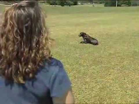 cen-tex-k-9-sit-means-sit-academy-commercial