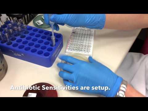 Microbiology at IDEXX