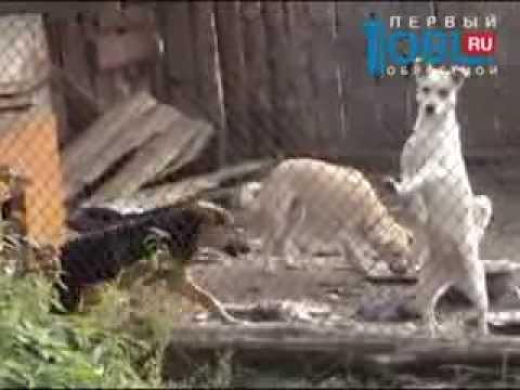 600 волонтеров строят приют для бездомных кошек и собак в Снежинске