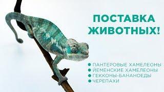 Поставка животных в EXOMENU!