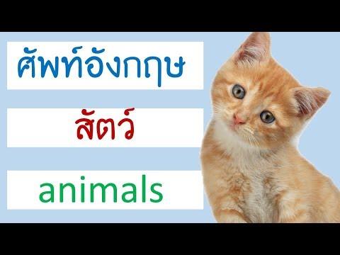 คำศัพท์ สัตว์ ภาษาอังกฤษ Animal