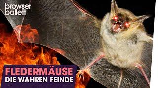 Fledermäuse: Die wahren Feinde