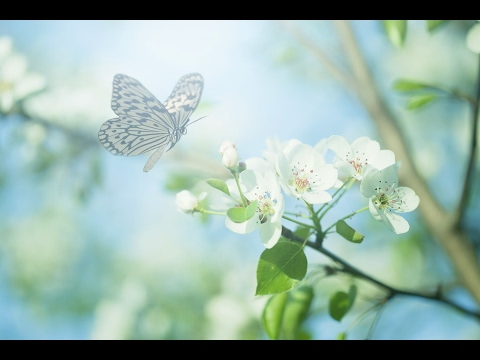 """Relaxing Music: Peaceful Nature Music """"New Journeys"""" by Tim Janis"""