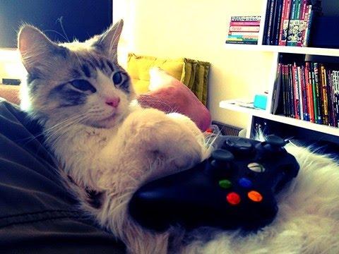 Resultado de imagen de gato gamer