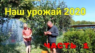 Наш урожай в 2020 году ЧАСТЬ 1