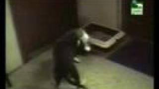 Videos Divertidos de Animal Planet : ESPECIAL DE GATOS