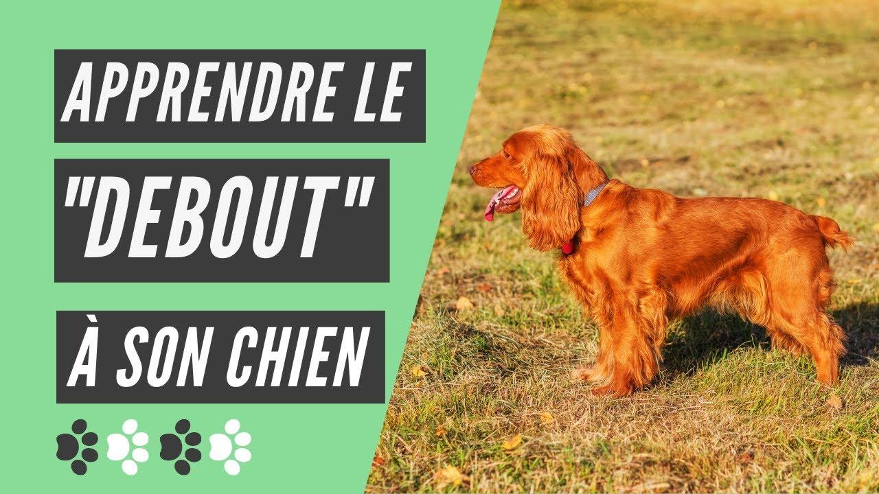Comment apprendre le debout à son chien ? - YouTube