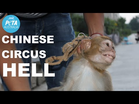 Animals Beaten in Chinese Circus Training