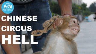 Animals Beaten in Chinese Circus Training