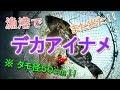 夜の漁港で デカいアイナメ 釣れた!! の動画、YouTube動画。