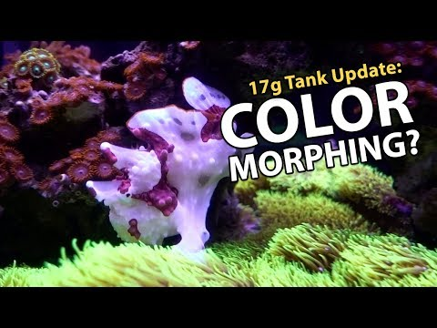 Frogfish Changing Color?! Filter For P&S Camera! (17g - 12/10/2017)