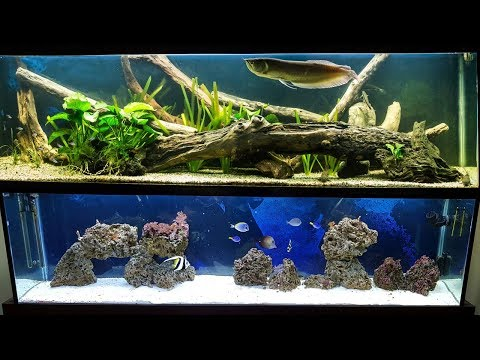 Aquarium Transformation From Freshwater To Saltwater