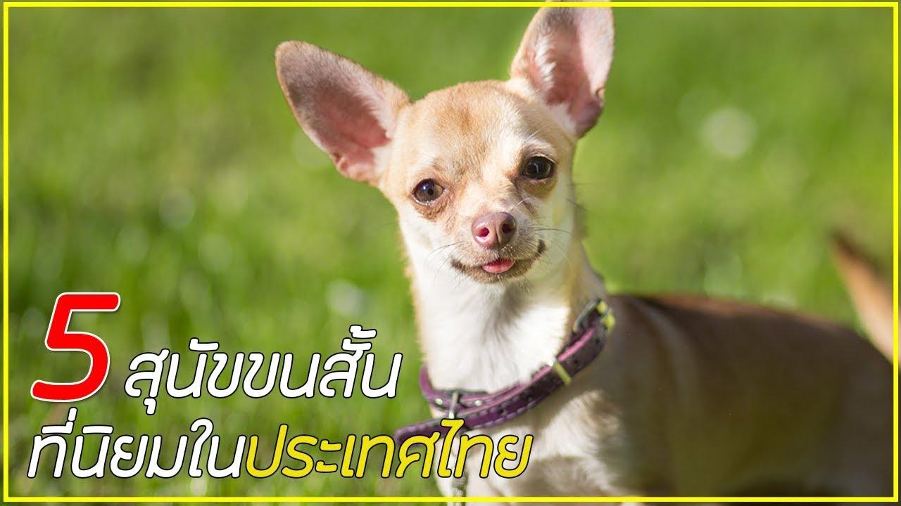 5 สายพันธุ์ สุนัขขนสั้นที่นิยมในเมืองไทย