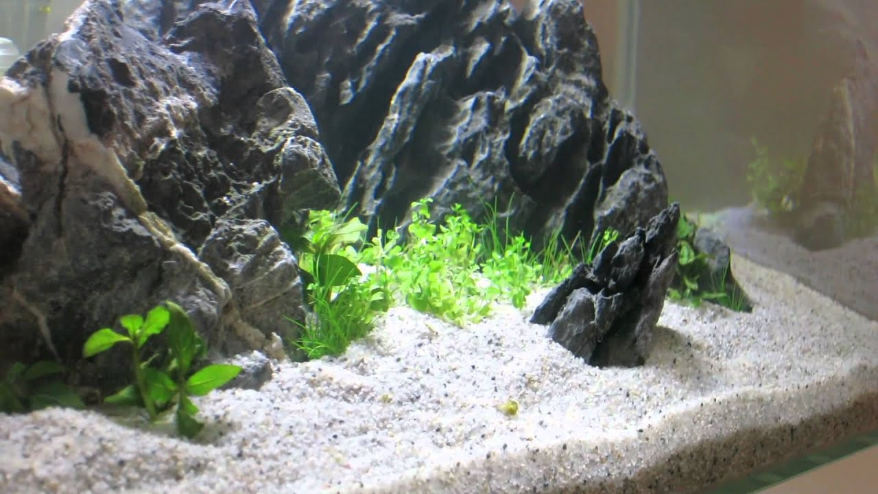 Iwagumi 2 In A Fluval Edge The Making Of Youtube