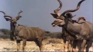 African Wildlife - National Geographic
