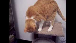 Watch A Video Of Alex The Cat.  He Found His Forever Home. Congratulations!!!