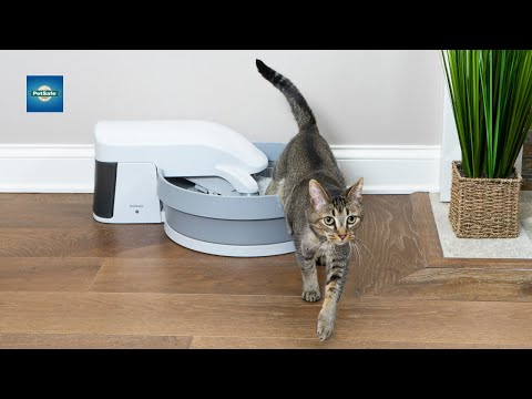 Keep Your Cat's Litter Box Clean without Scooping
