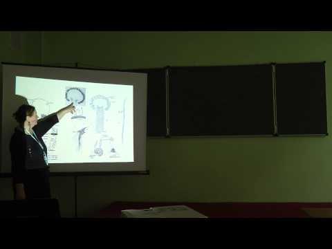 6.11.13 Альгология Белякова Г.А. часть 2