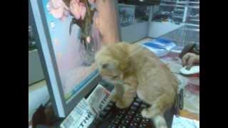 Забавный рыжий котенок/Funny redhead kitty