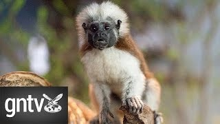 Meet the new monkeys at Green Planet Dubai - GN Guides thumbnail