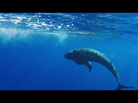 Interesting activity with a pilot whale, you can hear them communicating as well