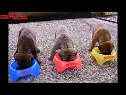 cibo secco per cani, cibo umido per gatti, alimenti dietetici per cani e gatti roma from YouTube · Duration:  1 minutes 25 seconds