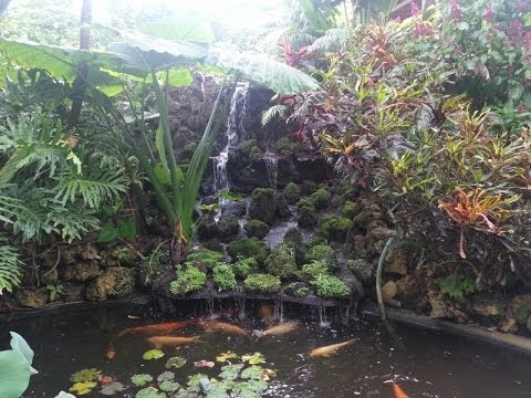 Tropical Botanical Gardens in Florida Called Sunken Gardens, St Petersburg, FL
