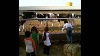 مزرعة حسين المبارك لإنتاج الحليب milk farm in kuwait
