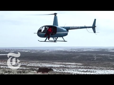 To Catch a Deer (Use a Helicopter) | The New York Times