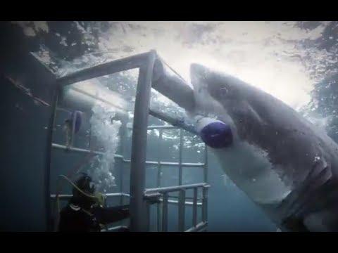 Акульи безумия