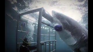 Акульи безумия | Неделя акул | Discovery Channel