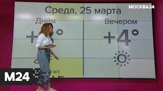 """""""Погода'': теплая погода ожидается в столичном регионе - Москва 24"""