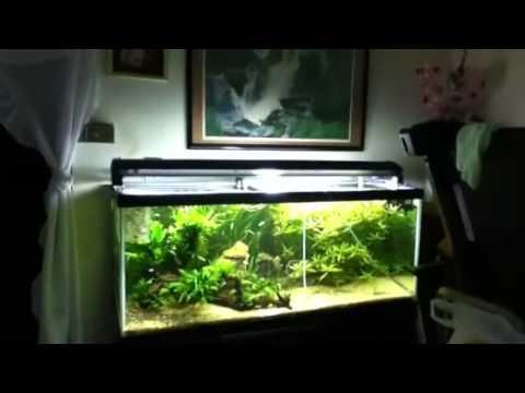 best tropical fish tank ever d youtube rh youtube com