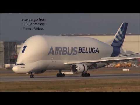 Airbus Beluga Vs  Boeing Dreamlifter