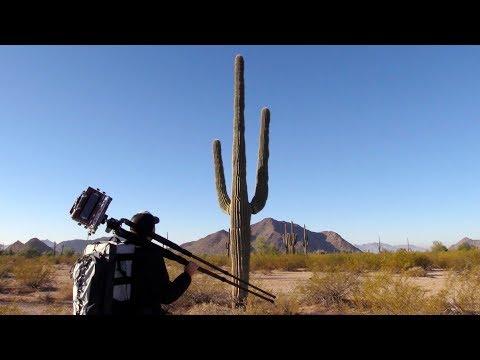 Photography On Location: Sonoran Desert Saguaros (Pt. 2)