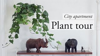 Plant tour - My city apartment plant collection