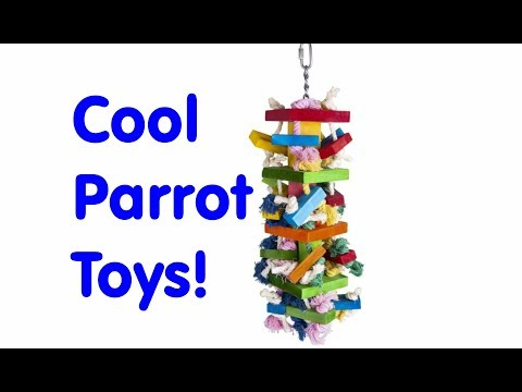 PARROT TOYS REVIEW!  OnePlus Ladder & Wooden Chew Toy!