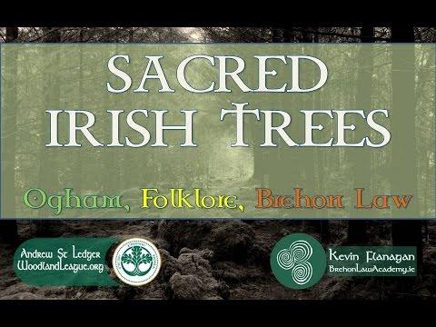 Sacred Irish Trees: Ogham, Folklore, Brehon Law.