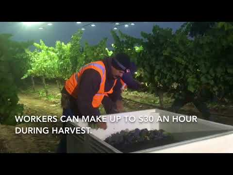 wine article 2018 Harvest