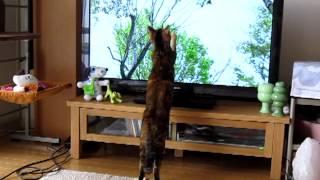 日曜日の朝 番組「さわやか自然百景」 (6/24放送)つづき 鳥さん大好き.