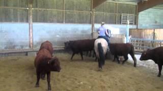Tri de bétail   1ere journée   oct 2012 035